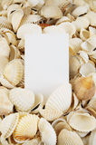 Seashell background and card Royalty Free Stock Photography