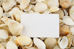 Seashell background and card Stock Images