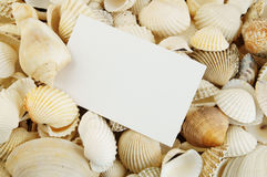 Seashell background and card Stock Image