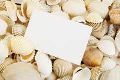 Seashell background and card Royalty Free Stock Photos