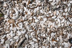 Seashell background A large number of small seashells. texture on the marine theme, top view stock photo