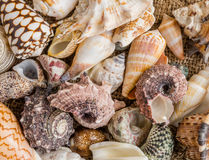 Seashell background, lots of different seashells piled together. Stock Image