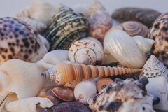 Seashell background. Lots of different seashells piled together. Seashells collection. Closeup view of many different seashells.