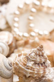 Seashell background with pearls Royalty Free Stock Image