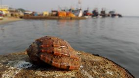 Seashell. In the background of the port Stock Photography