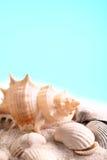 Seashell background Stock Images