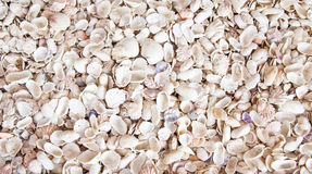 Seashell Background Royalty Free Stock Photo