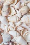 Seashell background. in studio Stock Photography