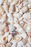 Seashell background. in studio Stock Images
