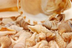 Seashell background with various kinds of shells Stock Photography