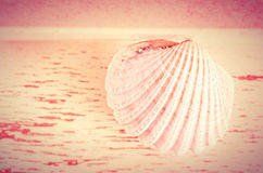 Seashell background Royalty Free Stock Images