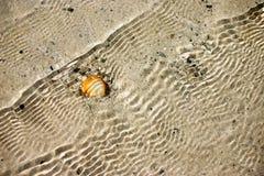 Seashell bajo el agua. Fondo imagen de archivo