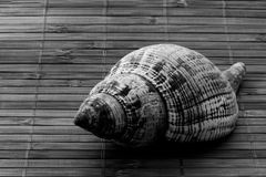 Seashell on bamboo matt in monochrome Royalty Free Stock Image
