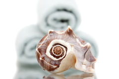 Seashell and bath towels. Stack of bath towels and seashell Royalty Free Stock Image