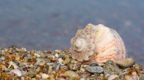 Seashell on the beach. Stock Image
