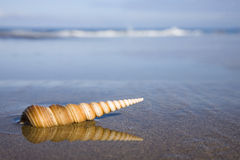 Seashell on the Beach. Spiral seashell on the beach with nice reflection Royalty Free Stock Photography