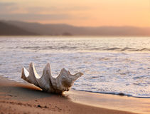 Seashell on the beach. Big shell on the beach at sunset Stock Image