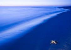 Seashell on the beach Stock Photography
