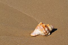 Seashell on beach Stock Photo