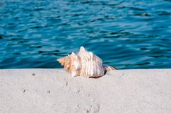 Seashell on the beach. Blue sea,summer holidays royalty free stock photos