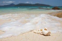 Seashell on a beach. Detail of a Seashell on a sandy beach Stock Photos