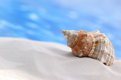 Seashell on the Beach. Large seashell on sand, water in the background Royalty Free Stock Photos