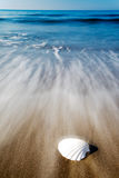 Seashell on a beach Royalty Free Stock Image