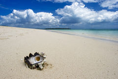 Seashell on beach. Seashell on sand beach with cloudy blue sky Royalty Free Stock Images