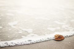 Seashell on beach Stock Photography