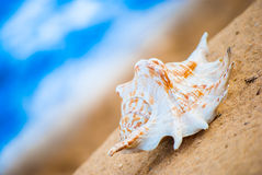 Seashell on the beach Royalty Free Stock Photos