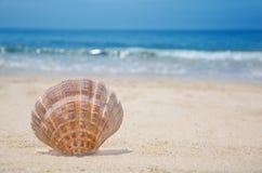 Seashell on a beach. Beautiful seashell on a sandy beach by the ocean Stock Photography