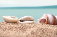 Seashell on the beach with blue ocean on background. Closeup of seashell on the beach with blue ocean on background Stock Images
