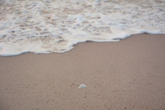 Seashell on the beach. stock image