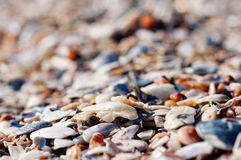 Seashell on the beach Stock Photos