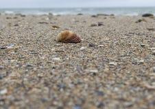 The seashell Stock Photo