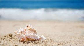 Seashell on a beach. One beautiful seashell on a sandy beach by the ocean Stock Photos