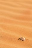 Seashell on beach sand Royalty Free Stock Photography