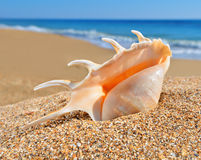 Seashell on a beach sand Royalty Free Stock Photos