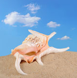 Seashell in beach sand Royalty Free Stock Photo