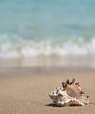 Seashell on the beach Royalty Free Stock Photo
