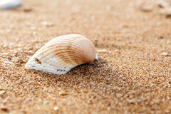 Seashell on the beach Stock Images