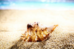 Seashell on beach sand Stock Photography