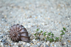 Seashell on the beach. Seashell on the sandy beach Stock Photo