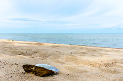Seashell on the beach. Of the sea Royalty Free Stock Photography
