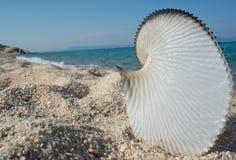 Seashell Beach Sea Royalty Free Stock Photography
