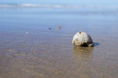 Seashell on the beach. Sea sand sky and summer day Stock Photos