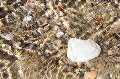 Seashell on the beach. Sea sand sky and summer day Royalty Free Stock Photos
