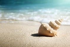 Seashell on the beach. (shallow DOF Royalty Free Stock Photography
