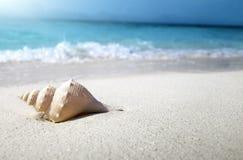 Seashell on the beach Royalty Free Stock Image