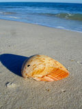 Seashell on the beach of St. Georges Island Stock Photo